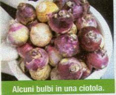Piante e il momento di moltiplicare la vostra pianta di - Bulbi estivi quando piantarli ...